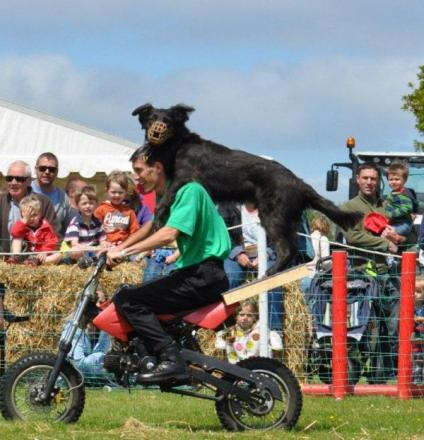 Brentwood-based dog display team attempting world record