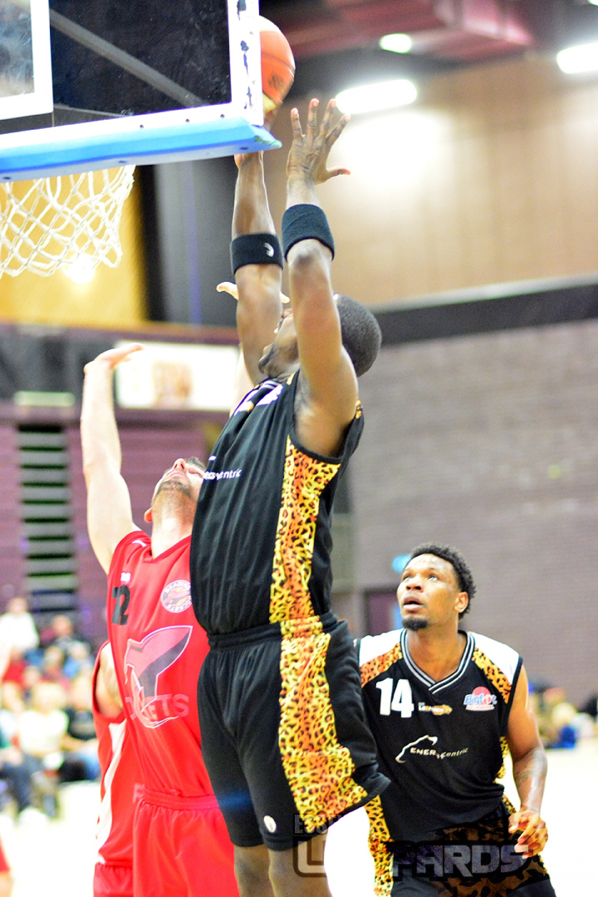 LEOPARDS: Big Cats face semi without Youngblood