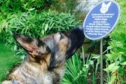 Essex Police commemorates loss of police dogs with plaque at Chelmsford HQ
